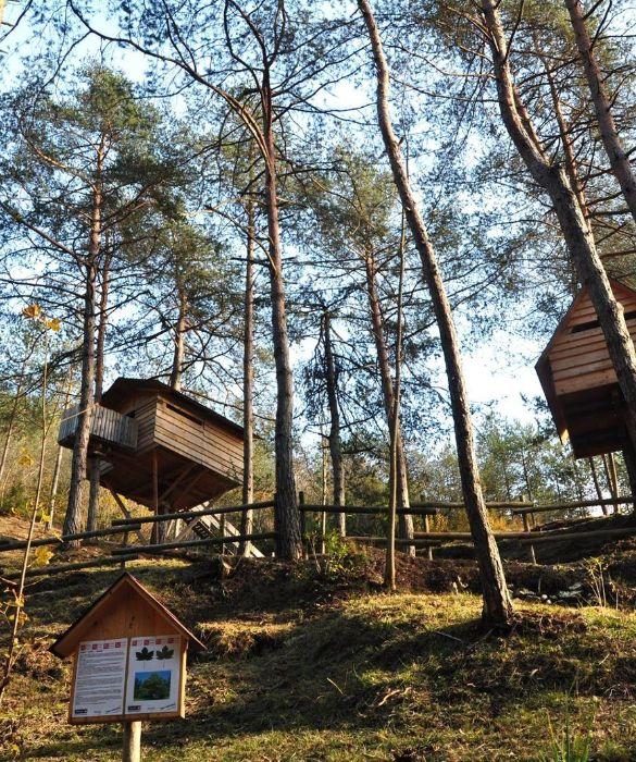 <p>Non una casa, ma un vero villaggio di case sull'albero. Nel <strong>Parco Naturale delle Dolomiti Friulane</strong>, nel comune di Claut, si trova, infatti, il villaggio di casette sugli alberi più grande del mondo. Qui le casette in legno d'abete, una dopo l'altra formano un paesaggio davvero unico. Il Tree Village è situato all'interno di un parco tematico in cui ci sono tutta una serie di opportunità di scoperta come l'Orto Biologico, il Museo all'aria aperta del Boscaiolo, il Sentiero Botanico e il Training Center di Nordic Walking, oltre a corsi di costruzione di case sull'albero.</p>